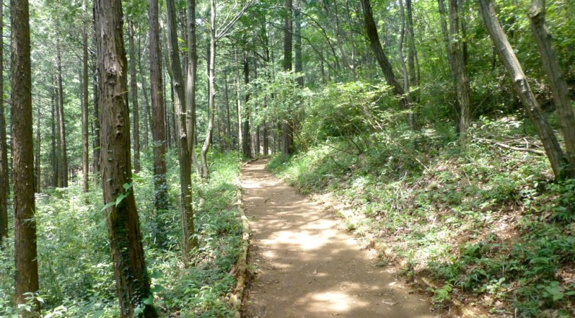 Part of the Mt. Hiwada trail