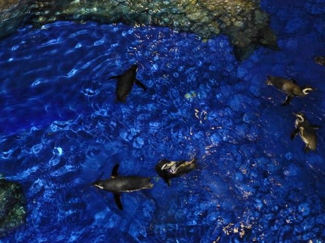 Penguins at Sumida Aquarium