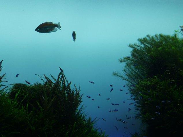 Fish tank at Sumida Aquarium