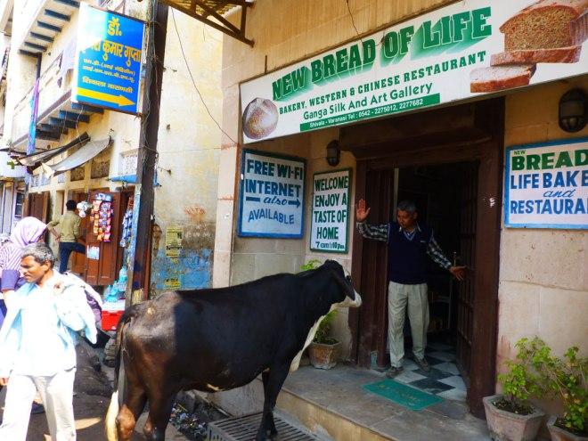 "This cow was waiting for the bakery to open, but the shopkeeper strong enforced the ""No shoes, no shirt, no service"" rule"