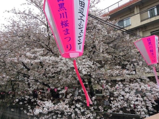 Nakameguro Sakura Festival