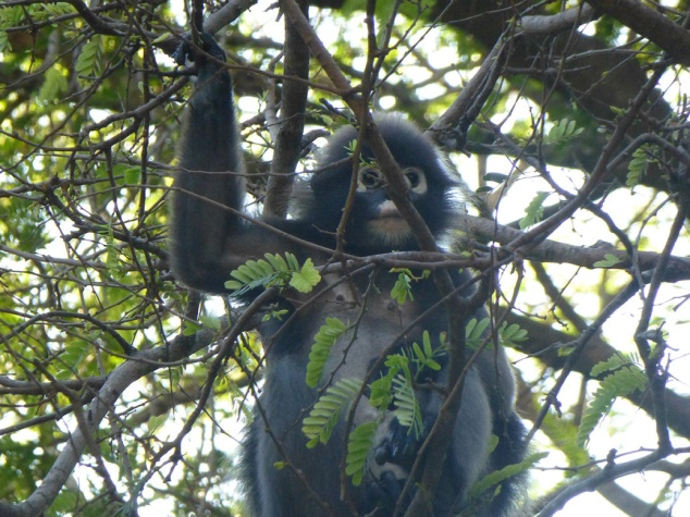 The trees around our campsite were full of langur monkeys. You could hear them swinging in the trees all day and night.