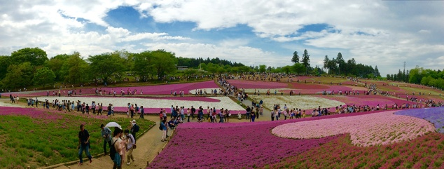 The phlox fields at Hitsujiyama Park in Chichibu