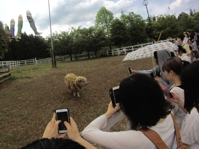 """Hitsuji"" means ""sheep"" in Japanese and ""yama"" means ""mountain,"" so the aptly-named Sheep Mountain Park should have a few sheep wandering the grounds. The local paparazzi went crazy for this one."