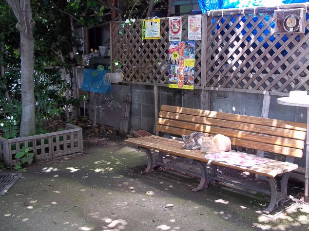 Two cats ruling the roost in a small neighborhood park near Chichibu Shrine.