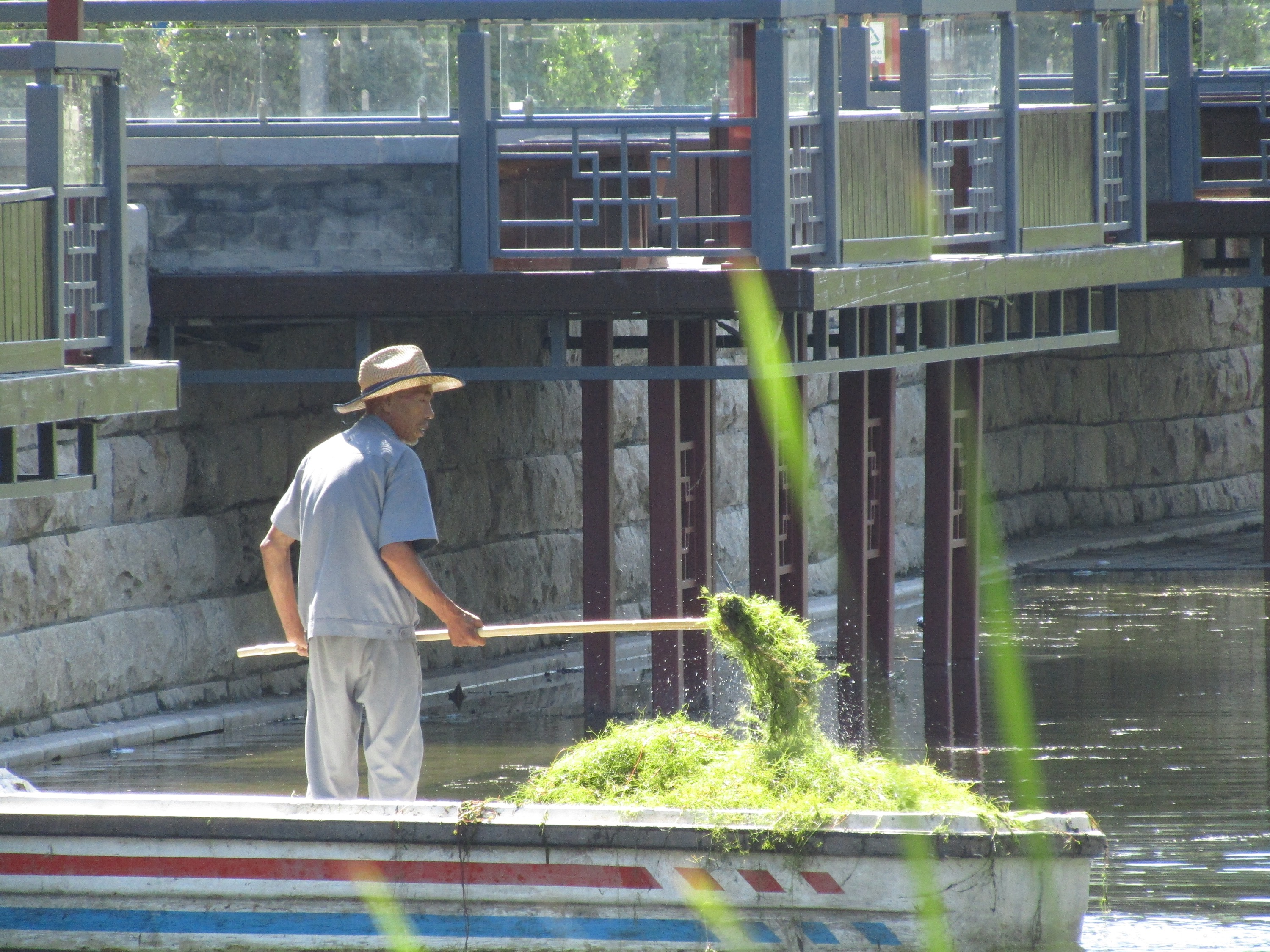 This fisherman was collecting seaweed from a small river near Maoer Hutong.