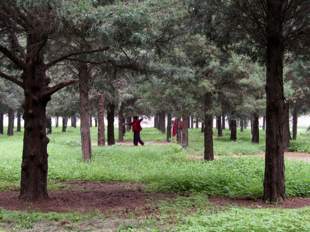 The park at Temple of Heaven is popular with locals looking to practice dance, play cards or toss a frisbee. We were lucky to spot this woman among the knotted cypruss trees.