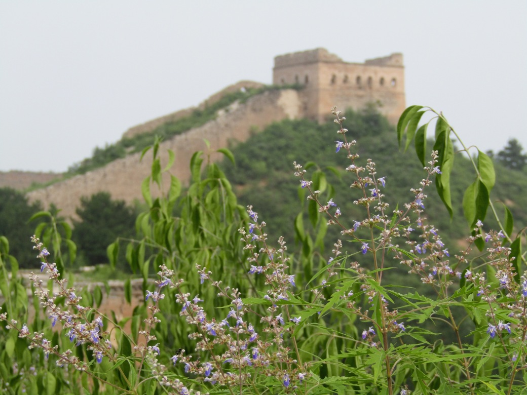 The area around the wall is mountainous, part of the defense strategy. The mountains also offered up greenery and beautiful mountain flowers, a nice contrast to Beijing's concrete jungle.