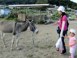 "The girl has a ""you're kidding me, right?"" look about feeding her carrot to the donkey."