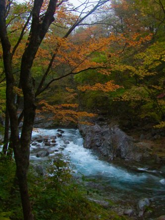 The changing fall colors in Kanmangafuchi Abyss