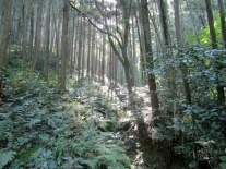 Hiking through the forest on Kannokura Mountain.