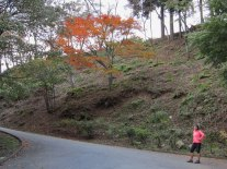 The winding road to Neno-Gongen temple shows a burst of autumn color