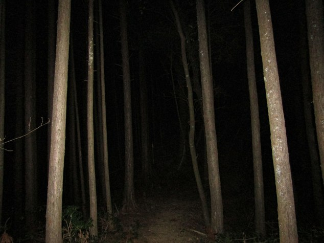 The last photo of the day, tree trunks illuminated by the camera flash as only darkness awaited us.
