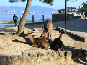 A public bath for the deer