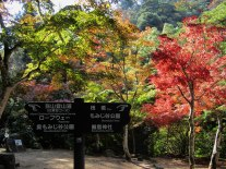 The autumn colors were in full force on Miyajima