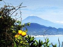 14_fuji_oranges