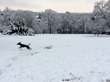 New friends enjoying the snow in Riegrovy Sady.